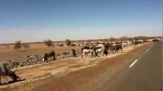 RTEA 2012 - Betail et routes (Mali)
