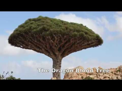 Socotra Forgotten Island
