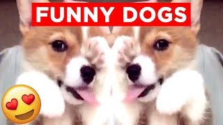 GOOD DOGGOS AND PUPPERS!! | Candid, Funny And Cute Dog Videos!! | Mas Supreme