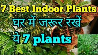 7 Best indoor plants in india, indoor plant decoration,इन 7 plants को जरूर लगायें घर के अंदर