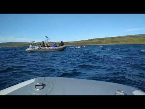 Swim in the Barents Sea 1 kilometer 500 meters.