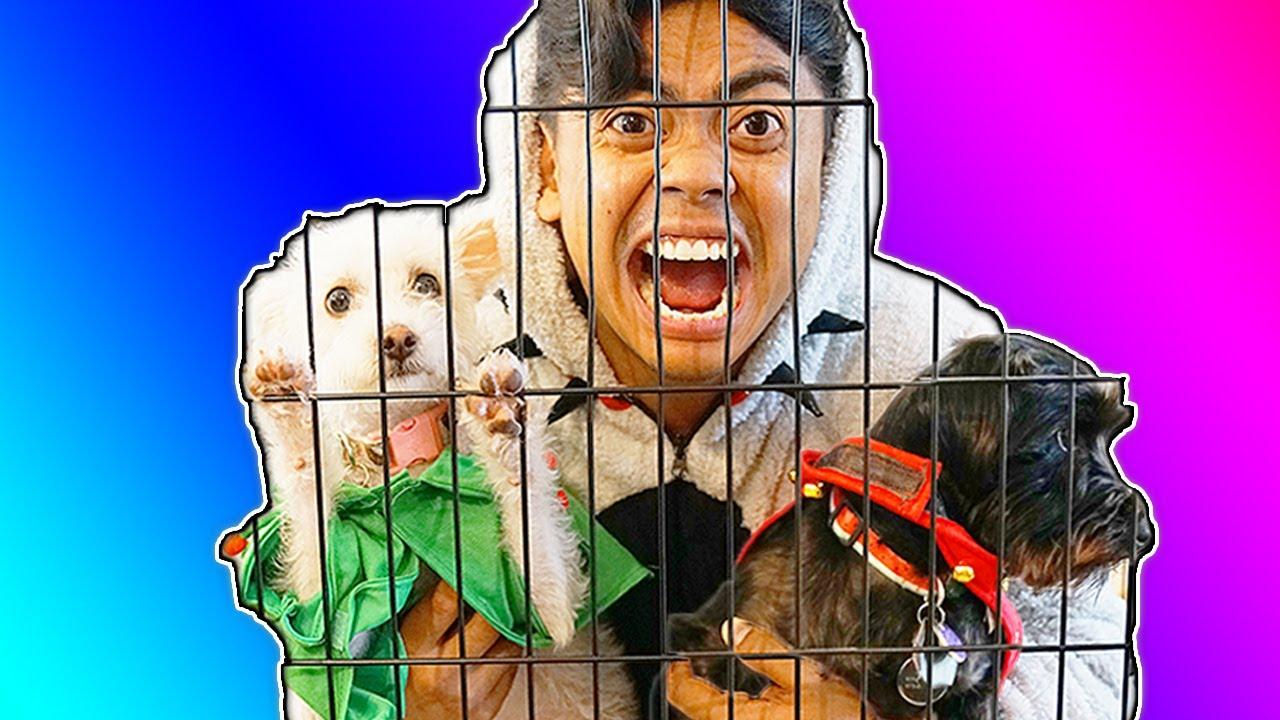 Escape The Dog Cage 4!