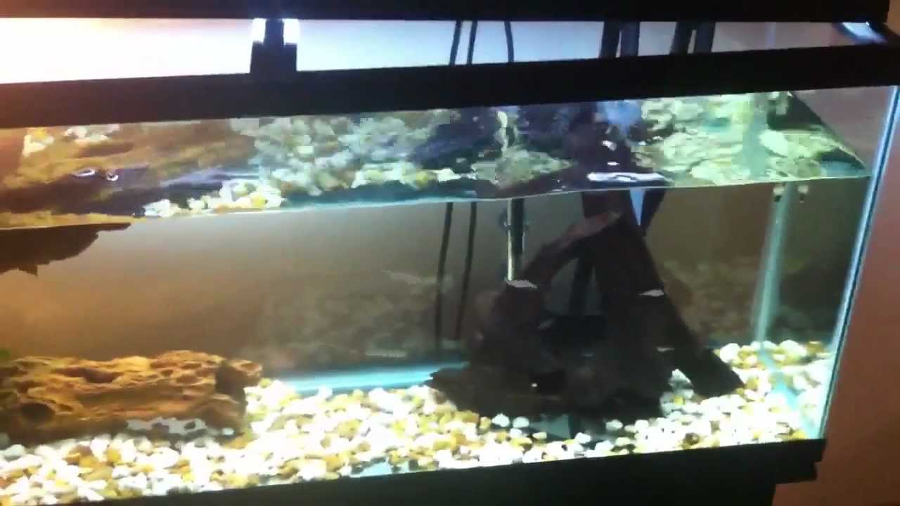 My 55 Gallon Turtle Tank Youtube