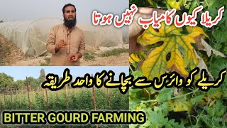July me karely ko virus se kese bchaen? How to protect bitter gourd crop from virus attack in summer