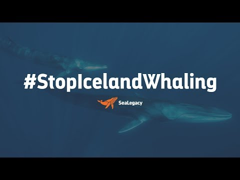 Stop Iceland Whaling