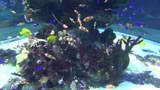 Aquarium Relax Shelf With Beautiful Fish And The Music Of Mozart [mozart Music]