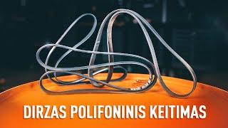 Kaip pakeisti Dirzas pleistiskas polifoninis - vaizdo vadovas