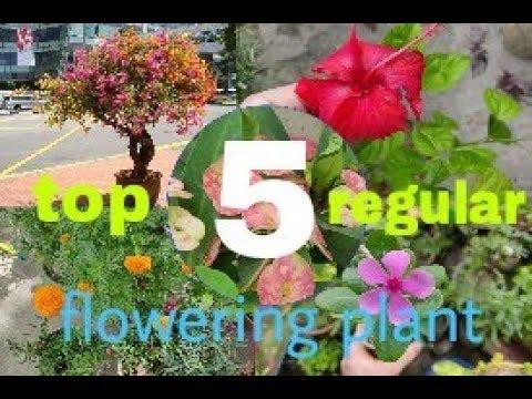 ?? ??? ????? ?? ???? ?????? ??? ????? ?? ????? ?? ??? ???? ?????? | top 5 permanent flowering plant