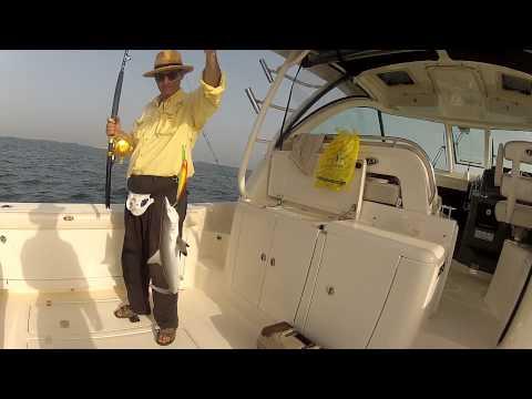 Fishing June 24 2014 Dubai Pursuit OS 385 Offshore