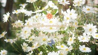 《ナチュラルガーデン》秋の庭に欠かせないナチュラルな宿根草❀新しく植えた花のご紹介《T's Gardenのガーデニング》