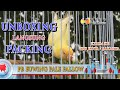 Unboxing Lovebird Pb Euwing Pale Fallow Sekalian Kirim Burung Lovebird Hope Hobbies  Mp3 - Mp4 Download