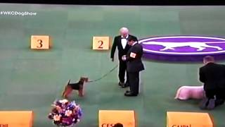 westminster kennel club dog show 2015 terrier selection