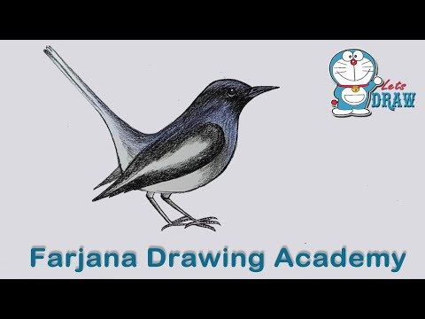 How to draw  Magpie step by step (very easy)