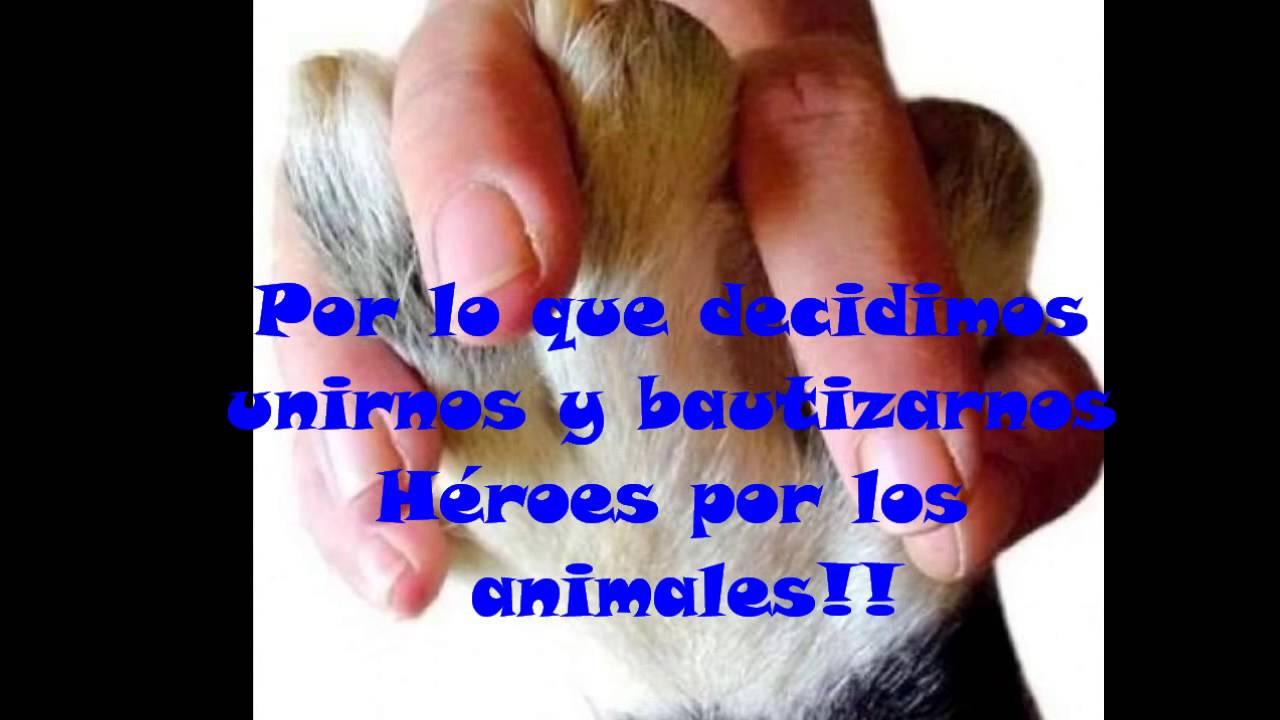 Héroes por los animales