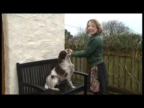 Dysgu Cymraeg / Learning Welsh