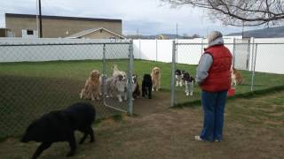 Dogs Wait Patiently For Names to Be Called