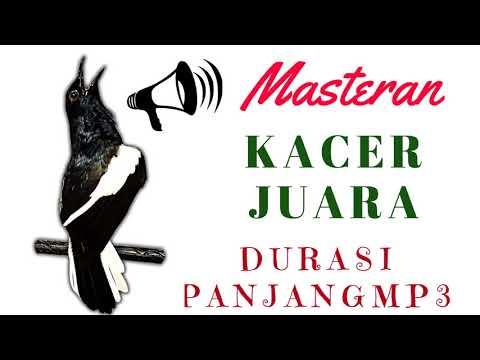 Masteran Burung Kacer Juara mp3 | Suara Master Burung Kacer Juara mp3