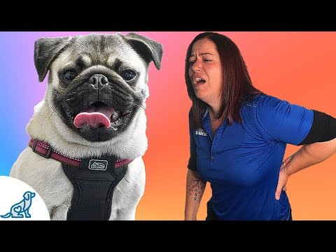 Small Dog Training - The Back Saving Secret That Professional Dog Trainers Know