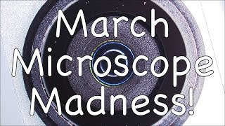 March Microscope Madness! (Week 5 - 2015)