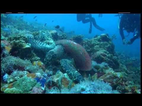 Toucan Dive Philippines   Site Verde Island 2014