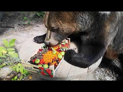 Ящичек ягод для медведя