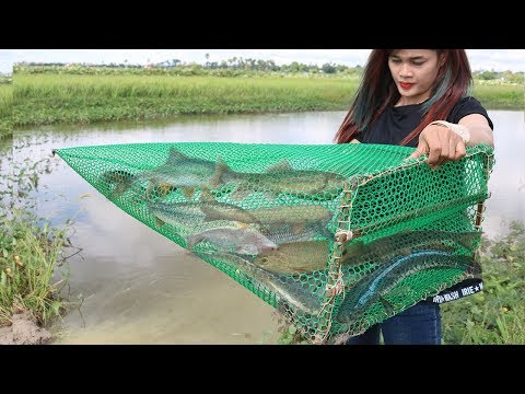 Amazing Fish Trap -  Creative Girl Makes Very Simple Fish Trap To Catch A Lot Of Fish