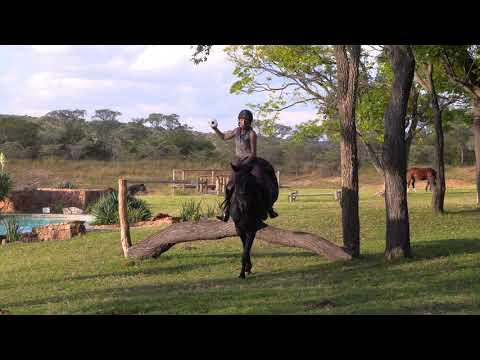 Toilet Roll Challenge - Horse Safari Africa