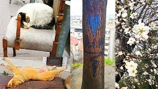 В поисках дерева желаний. Весна в феврале! Уличные балдёжники. Турция, Измир, Susuz Dede Pakrı