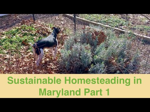 Sustainable Homesteading in Maryland Part 1
