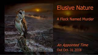 A Flock Named Murder - Elusive Nature (An Appointed Time - 2018)