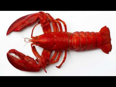 Lobster Facts Interesting Facts about Lobster Facts about Lobster