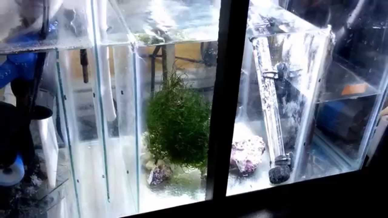 Clean Up Crew Help | REEF2REEF Saltwater and Reef Aquarium ...