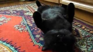 Кот Батик в привычном релаксе