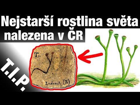 """TIP#83 Nejstarší rostlina světa """"nalezena"""" v ČR, První plovoucí jaderná elektrárna"""