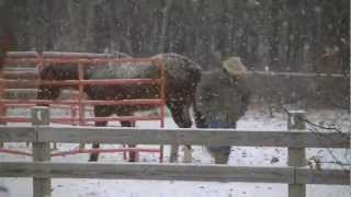 Last good snow we had: Mike and Horses