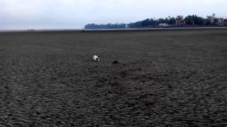 Dog vs Rat