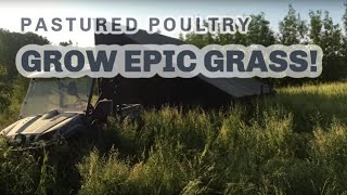 S5 ● E43 I can't believe how much Chickens have transformed our pastures