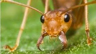 видео Раптор от тараканов и муравьев