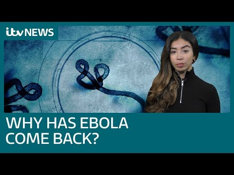 Why is Ebola back? The world's second largest outbreak in the DRC, explained | ITV News