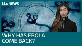 Why is Ebola back? The world's second largest outbreak in the DRC, explained   ITV News