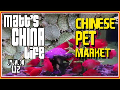 CHINESE PET & PLANT MARKET
