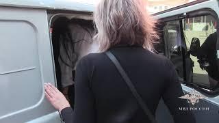 Задержание проституток в секс-притоне Чебоксар
