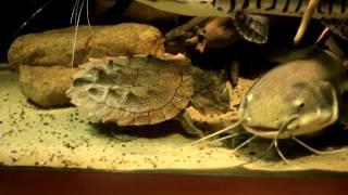Видео о коллекции(Какая рыба находится в аквариуме на 2500 литров и почему?)
