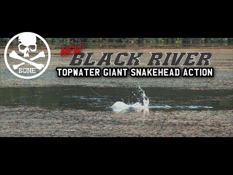 Topwater Heavy Cover Giant Snakehead Action with New BONE Black River