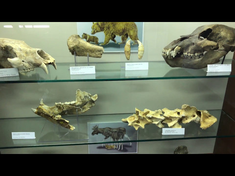 Priabona-Monte di Malo (Italy) fossil's museum - Museo Paleontologico Priaboniano UHD 4K