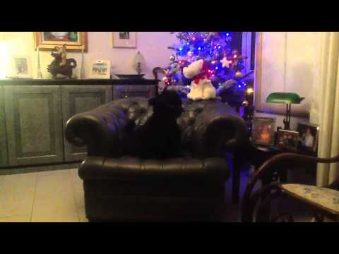 Singing Christmas Scottie Dog Jock