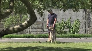Бесплатная вакцинация домашних животных проводится в Пинске
