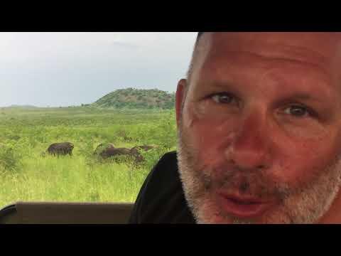 08 - South Africa - Kruger National Park - Cape Buffalo