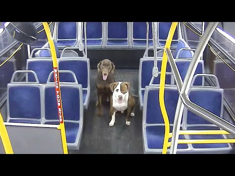Pet Central - City bus driver had 2 unusual passengers: stray dogs wandering the streets
