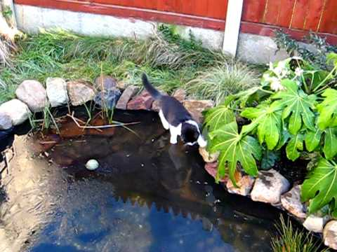 Spingy the cat on frozen pond youtube for Koi pond freezing
